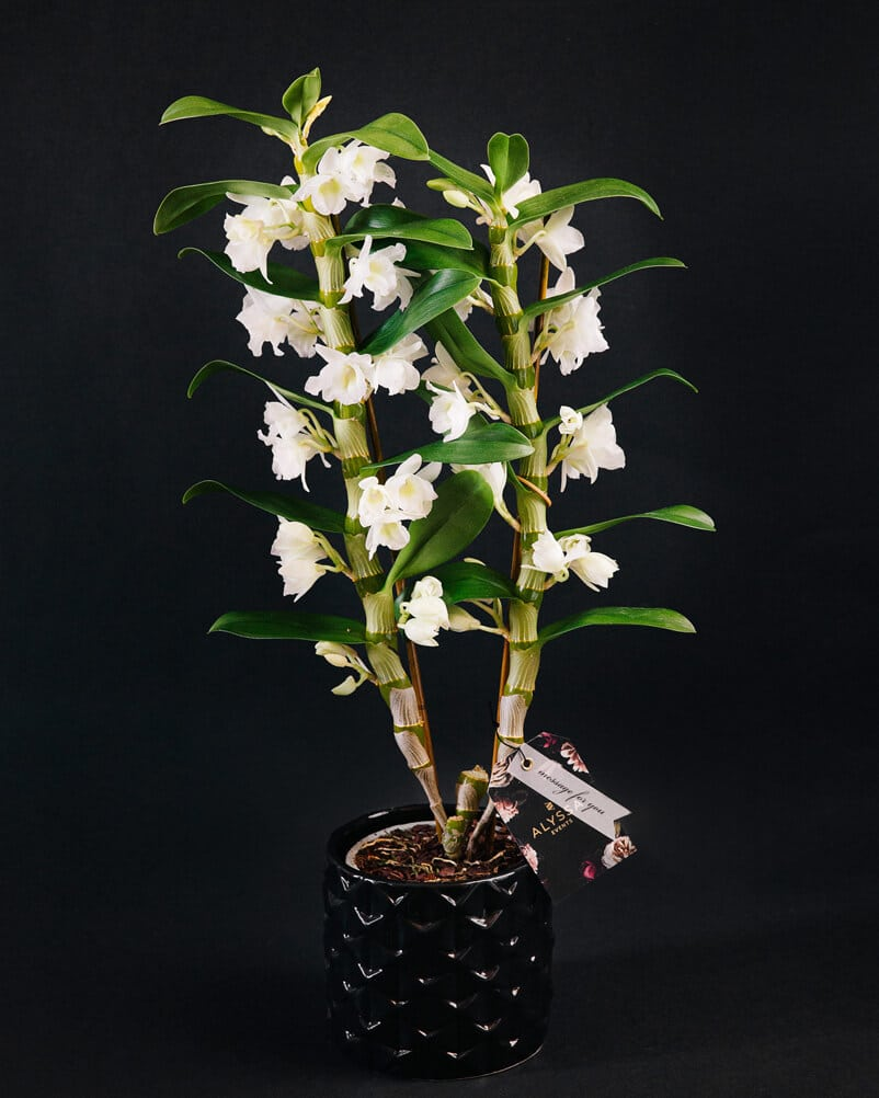 Livrare flori brasov